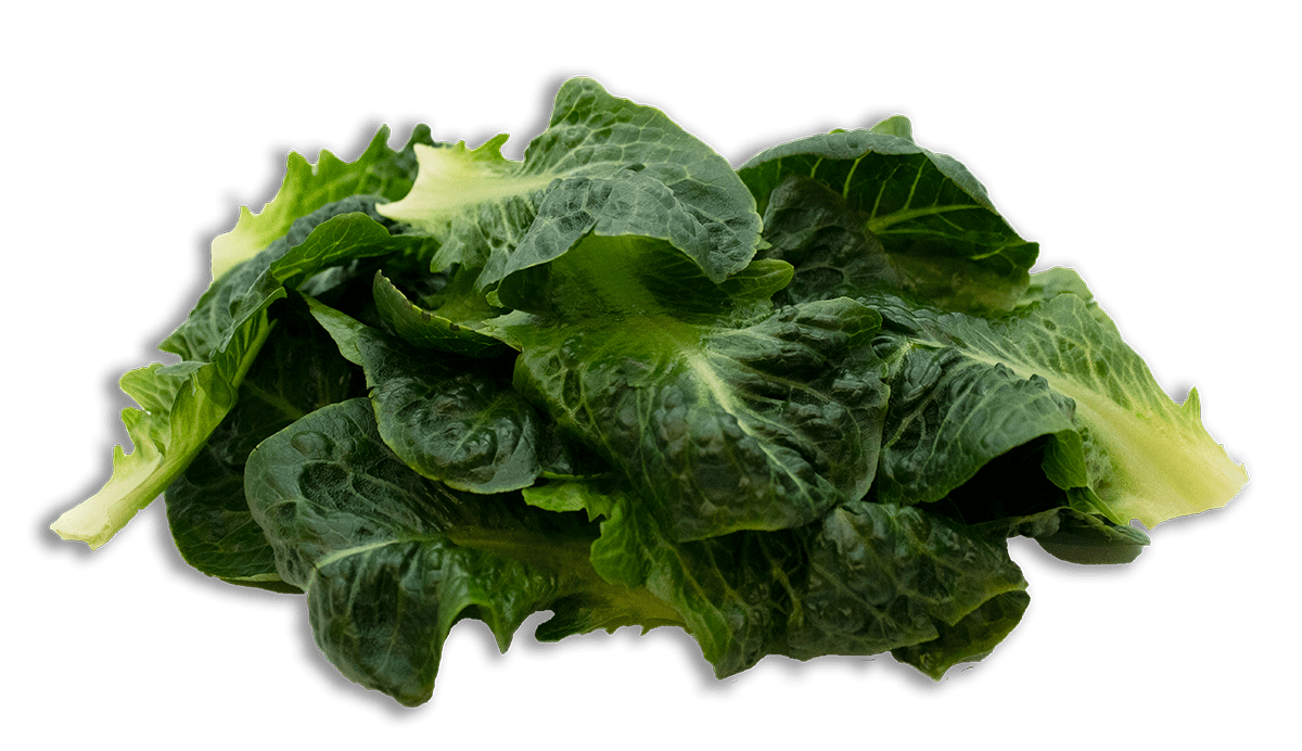 Robust Romaine